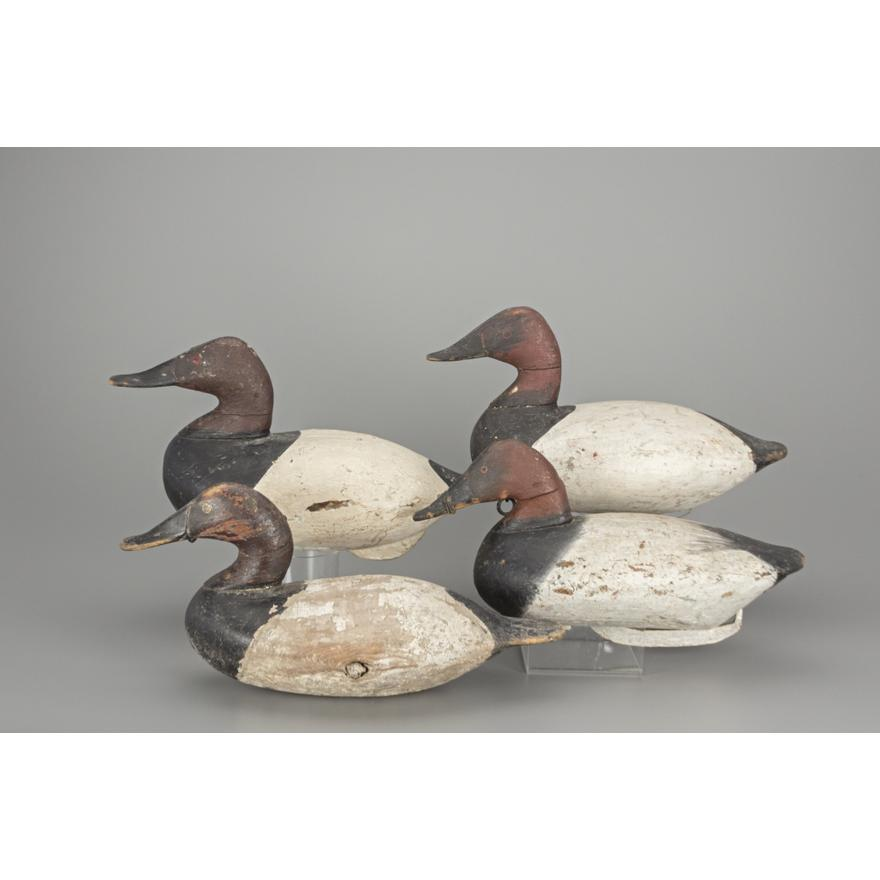Four Canvasback Drakes, Upper Bay, MD | Copley